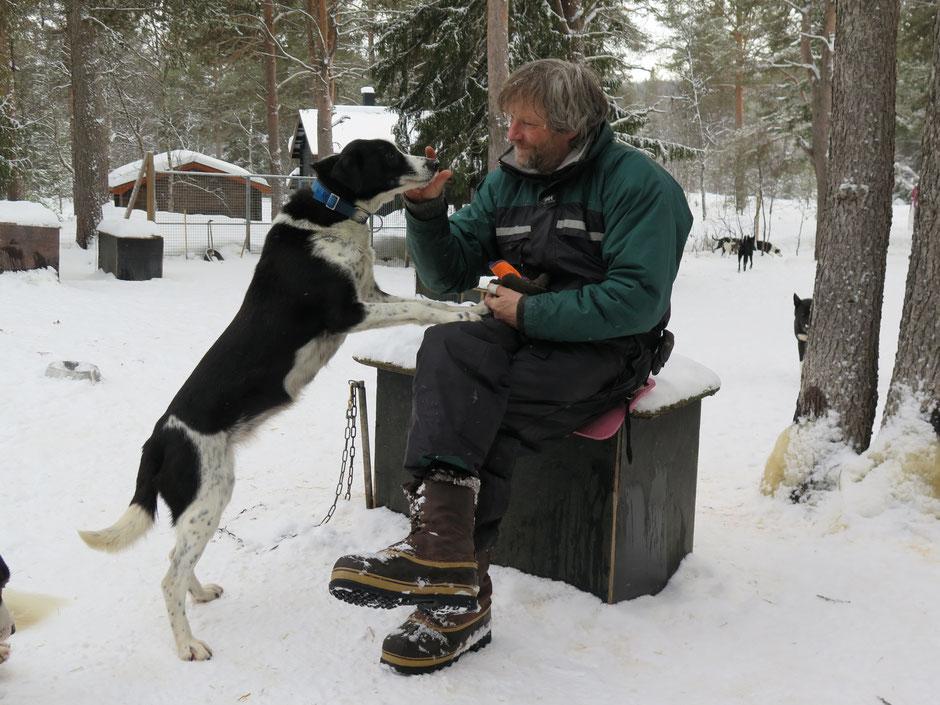 Helags Husky : Husky Touren mit Smilla
