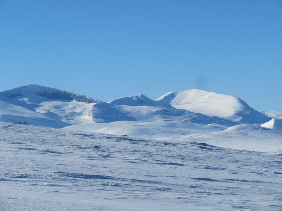 Helags Husky : der Helags Gletscher