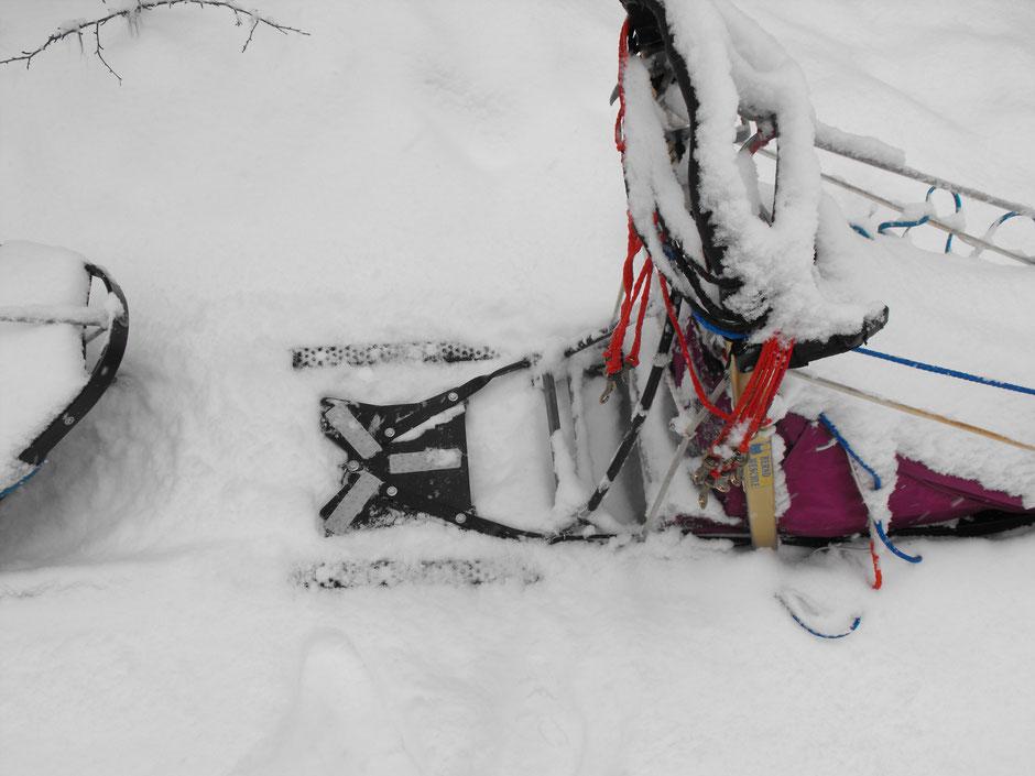 Helags Husky : verschneiter Hundeschlitten