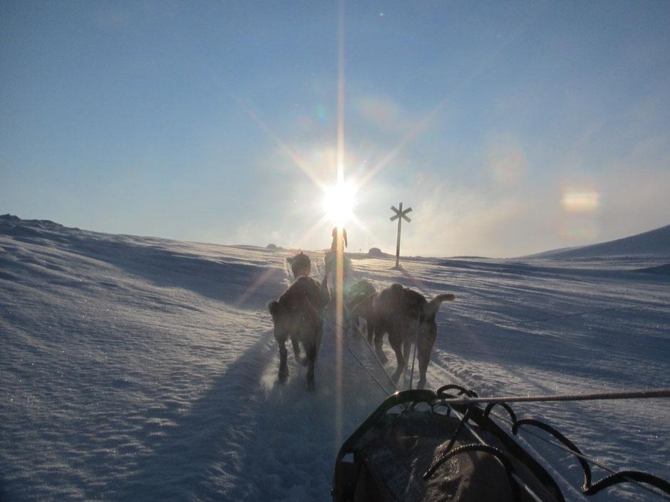 Helags Husky : Steiler Anstieg