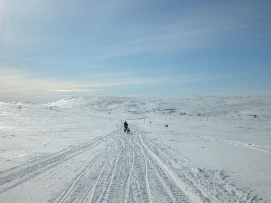 Helags Husky : Auf dem Trail