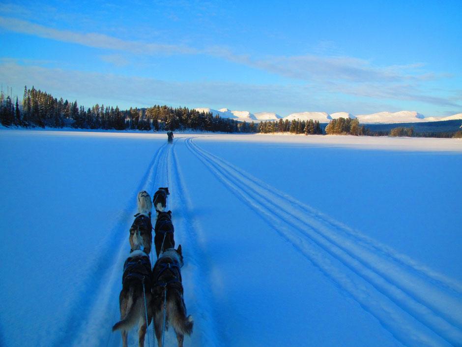 Helags Husky : Auf dem See