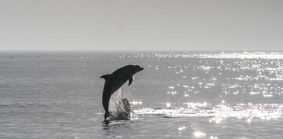 Swakopmund Blog Delfin Cruise