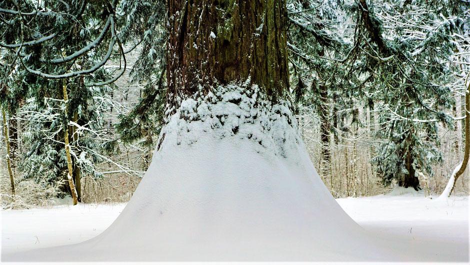 Hotels Sequoia-Nationalpark günstige Unterkünfte