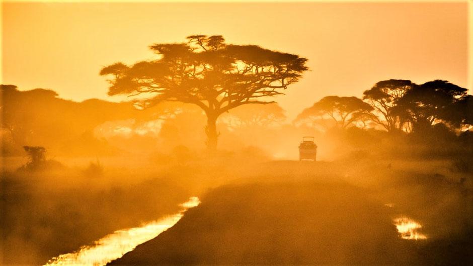 Afrika Safari Reise Blog Elefant in Botswana