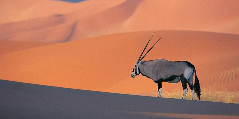 Namibia Sossusvlei Blog Hidden Vlei