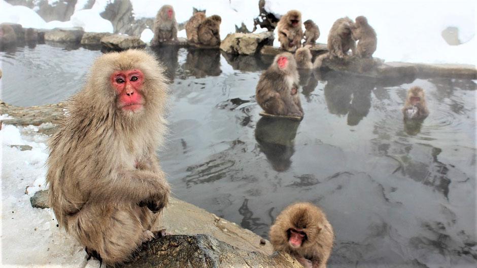 Onsen Japan Regeln - Affen baden im heißen Wasser