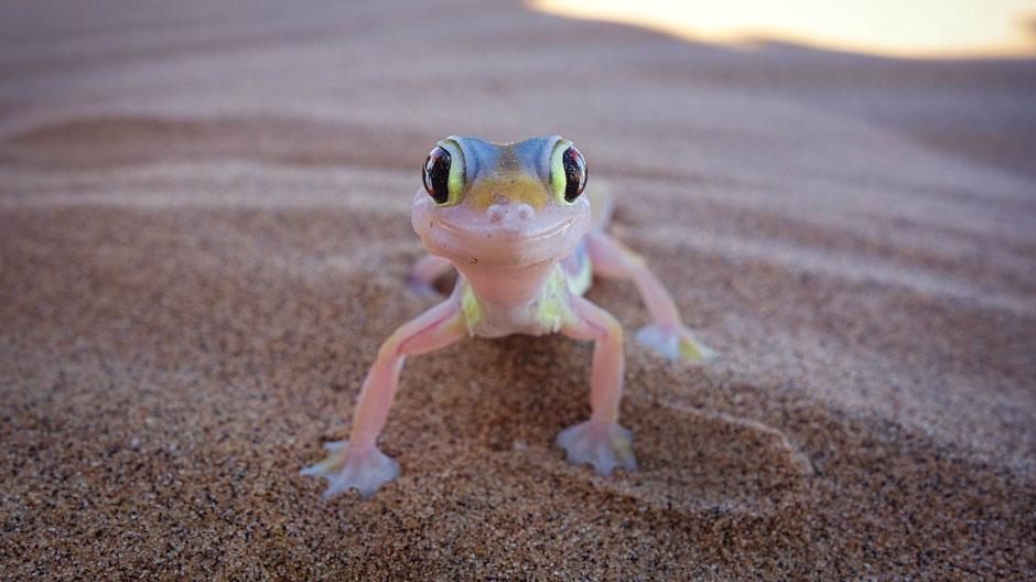 Swakopmund Reisebericht Little Five in Living Desert