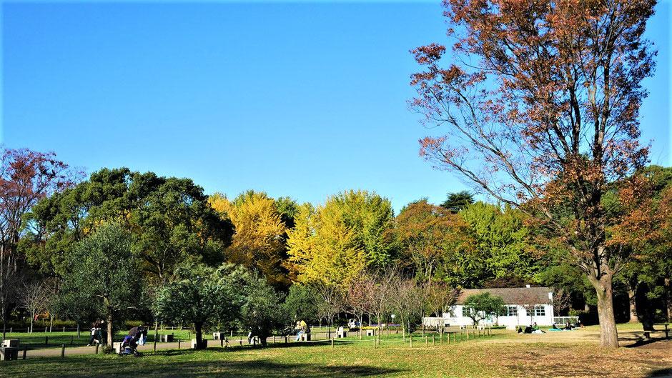 Tokio Reisetipps Yoyogi Park