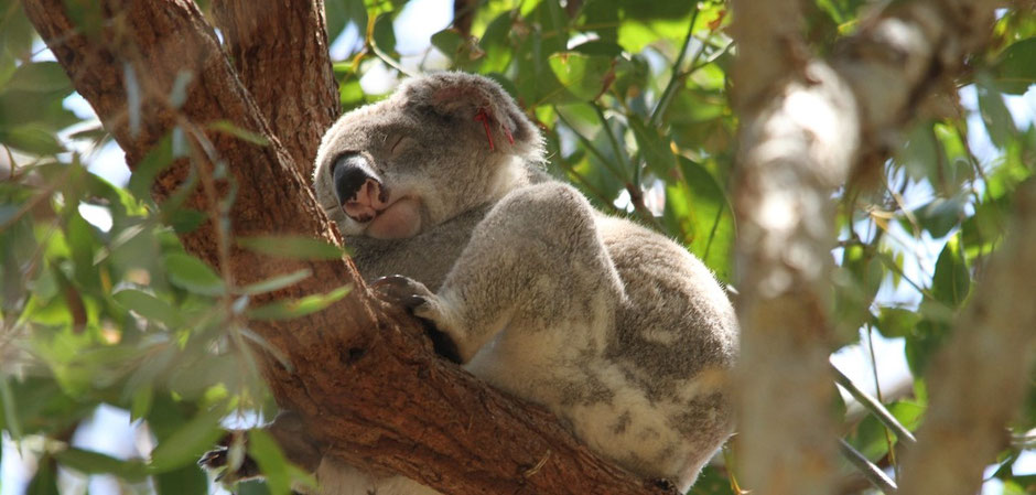 Beste Australien Nationalparks : Noosa