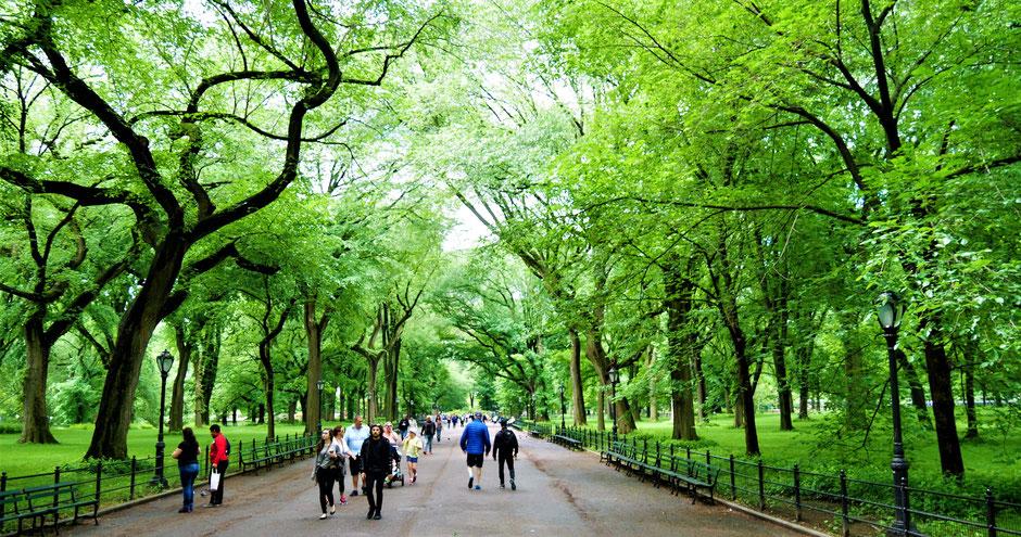 New York Reisebericht Frische Luft schnappen im Central Park