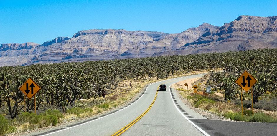Joshua Tree National Park Hotels Tipps und Unterkünfte