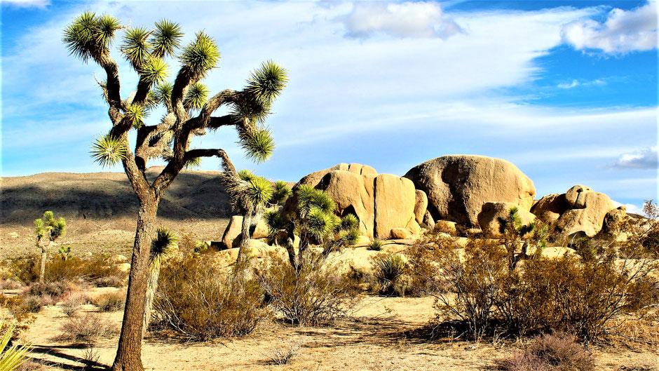 Joshua Tree National Park Hotels und Lodges