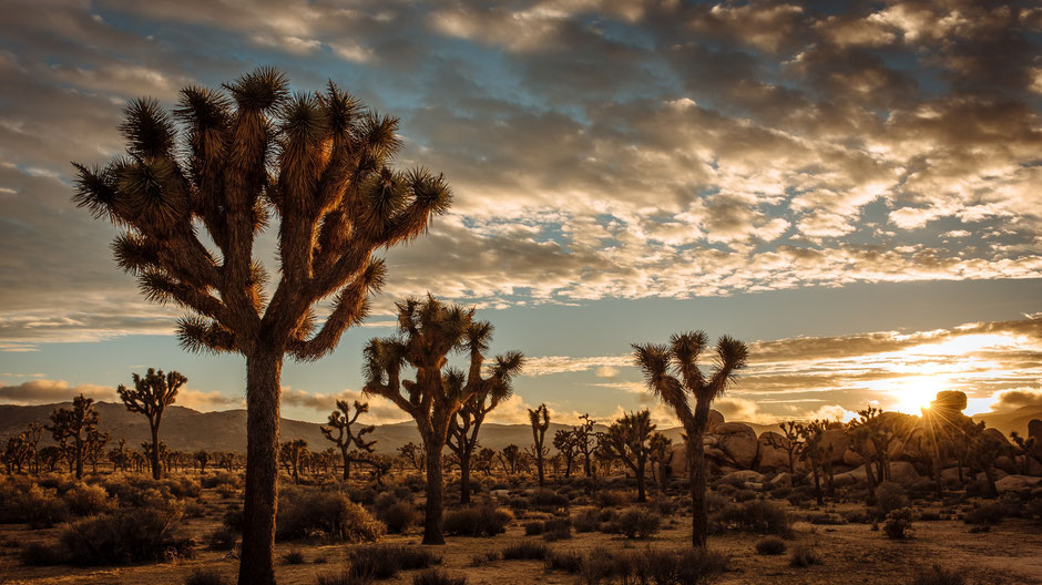 Joshua Tree National Park Hotel Tipps