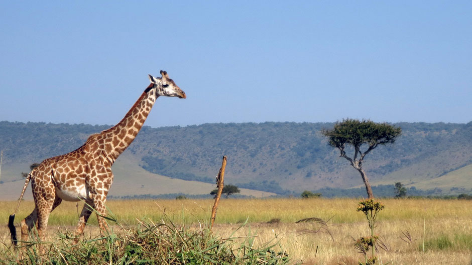 masai mara safari erfahrungen Anreise Lage Route