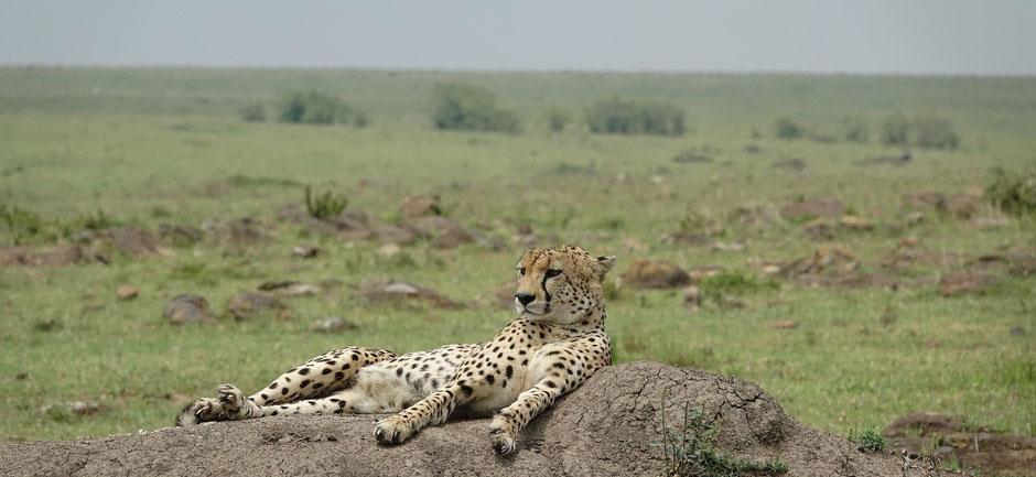 masai mara safari erfahrungen Sehenswürdigkeiten