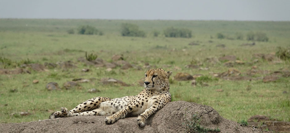 kenia masai mara safari erfahrungen Sehenswürdigkeiten