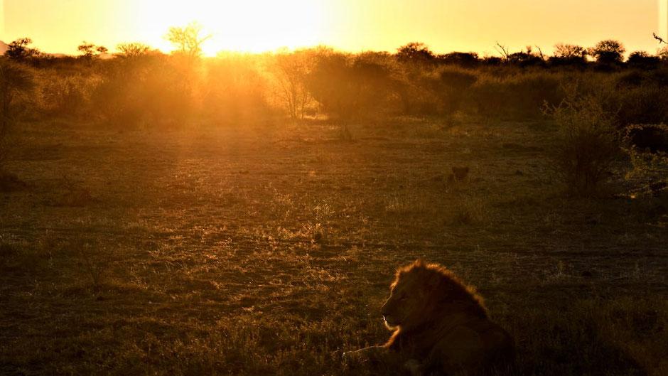Afrika Safari Reise Blog Morning Game Deive