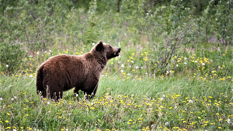 Vancouver Island Tipps - Bear Watching
