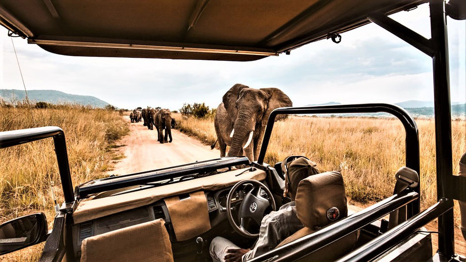 Afrika Safari Reisebericht Game Drive im Geländewagen in Südafrika