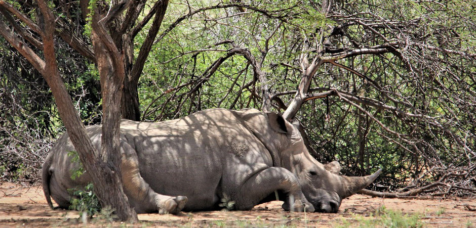 Reiseberichte Krüger Nationalpark