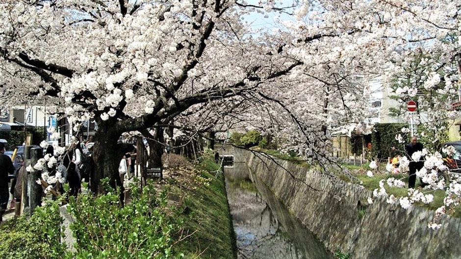 Kyoto Sehenswürdigkeiten Top 10 Philosophenpfad