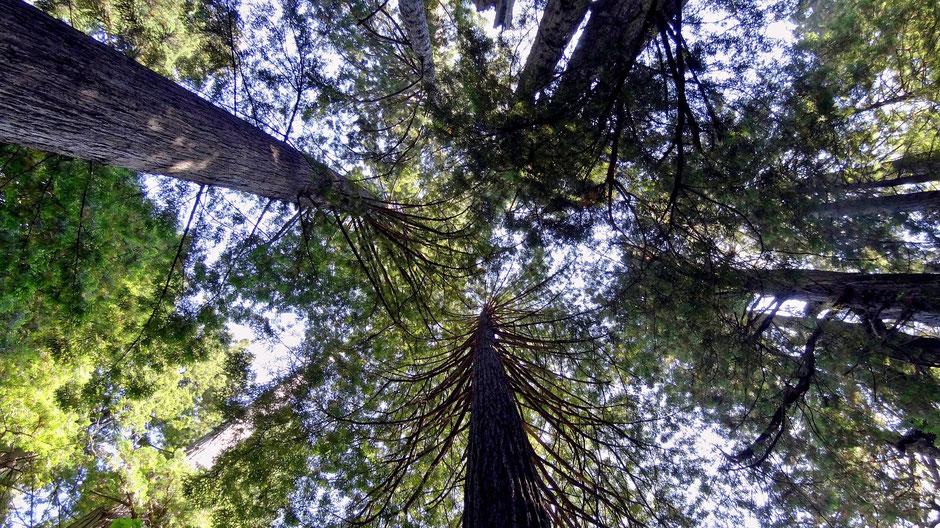 Sequoia Nationalpark Unterkunft Empfehlung