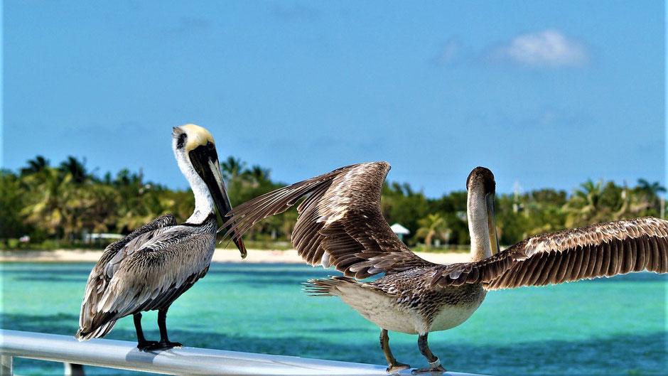 Beste Reiseziele Januar USA- Key West, Florida
