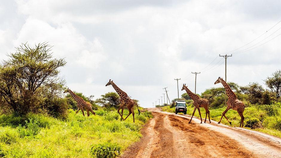 Amboseli Nationalparks Hotels und Lodges