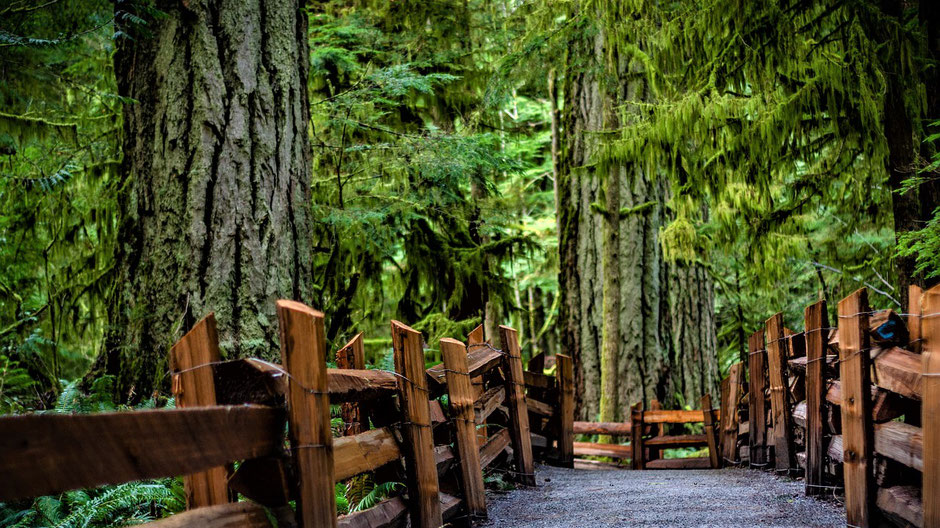 Vancouver Island Tipps - Cathedral Grove