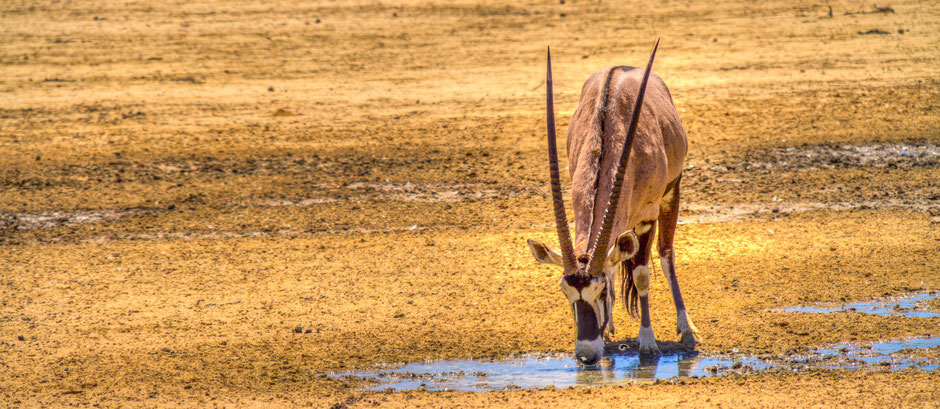 beste reisezeit südafrika safari