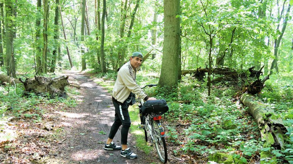 Mecklenburgische Seenplatte Sehenswürdigkeiten: Mit dem Fahrrad durch die grünen Wälder des Müritz Nationalpark