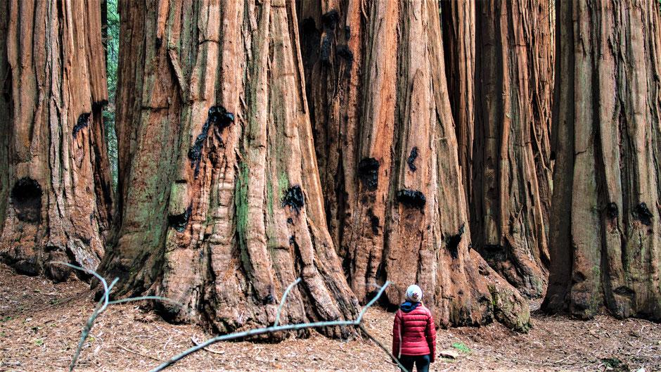 Hotels Sequoia-Nationalpark für die Rundreise