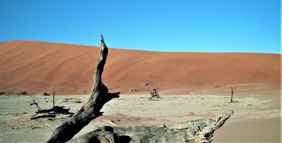 Namibia Sossusvlei Erfahrungen Deadvlei