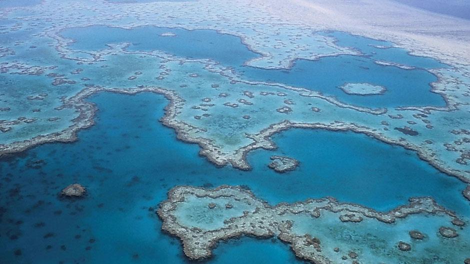 Cairns Sehenswürdigkeiten : Great Barrier Reef