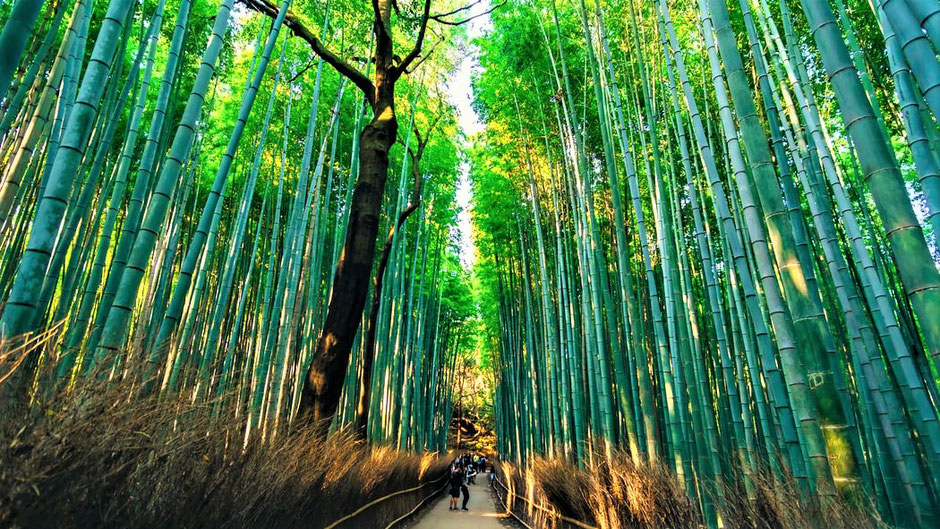 Kyoto Sehenswürdigkeiten Top 10 Arashiyama Bambuswald