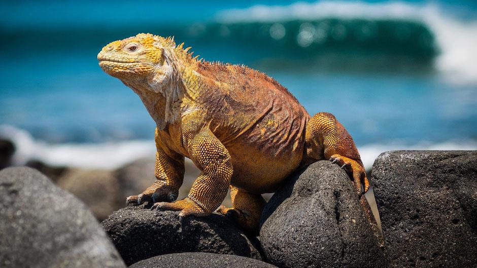 Galapagos Reiseblog Drusenköpfe