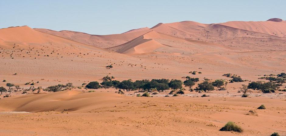 Namibia Sossusvlei National Park Elim Düne