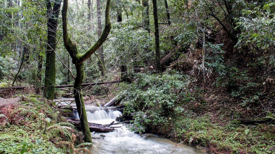 Redwood National Park Hotels mit Halbpension