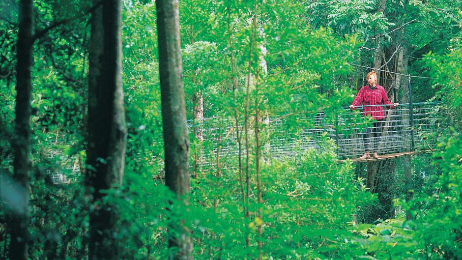 Reiseführer Brisbane Lamington Nationalpark