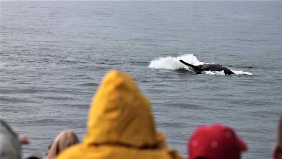 Victoria Vancouver Island Sehenswürdigkeiten Whale Watching