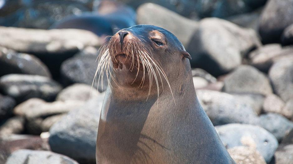 Galapagos Reisebericht Seelöwen in der Sonne