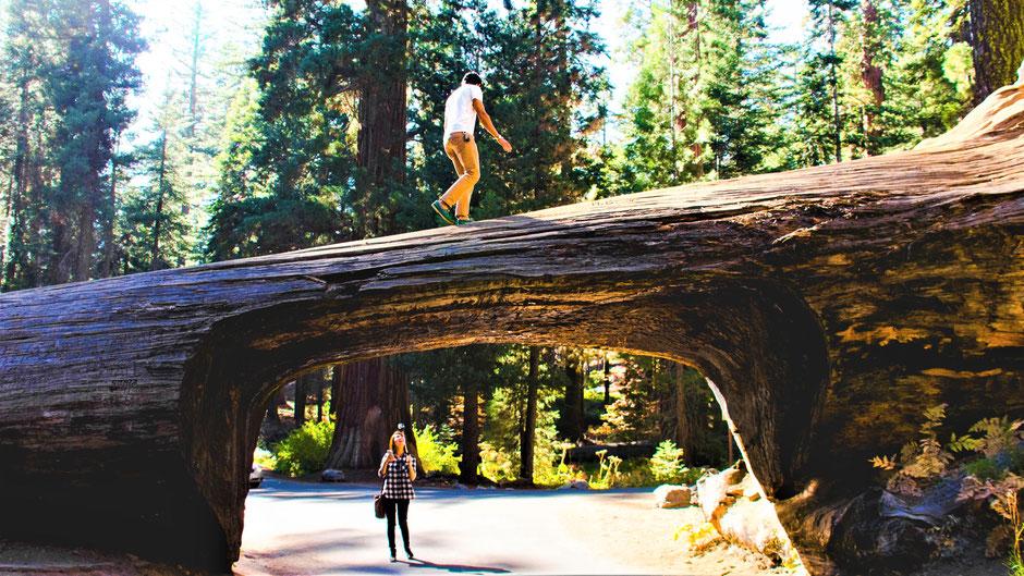 Hotels Sequoia-Nationalpark romantische Lodges