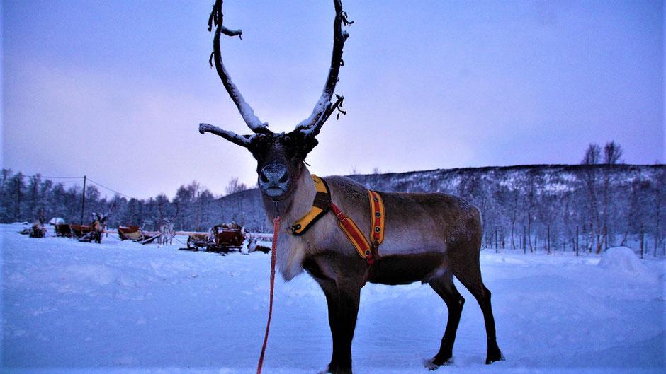 Reiseziele Februar Europa - Lappland