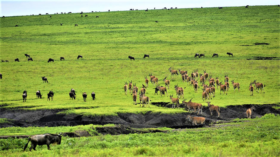 Reiseziele Januar Afrika- Kilimanjaro Tansania