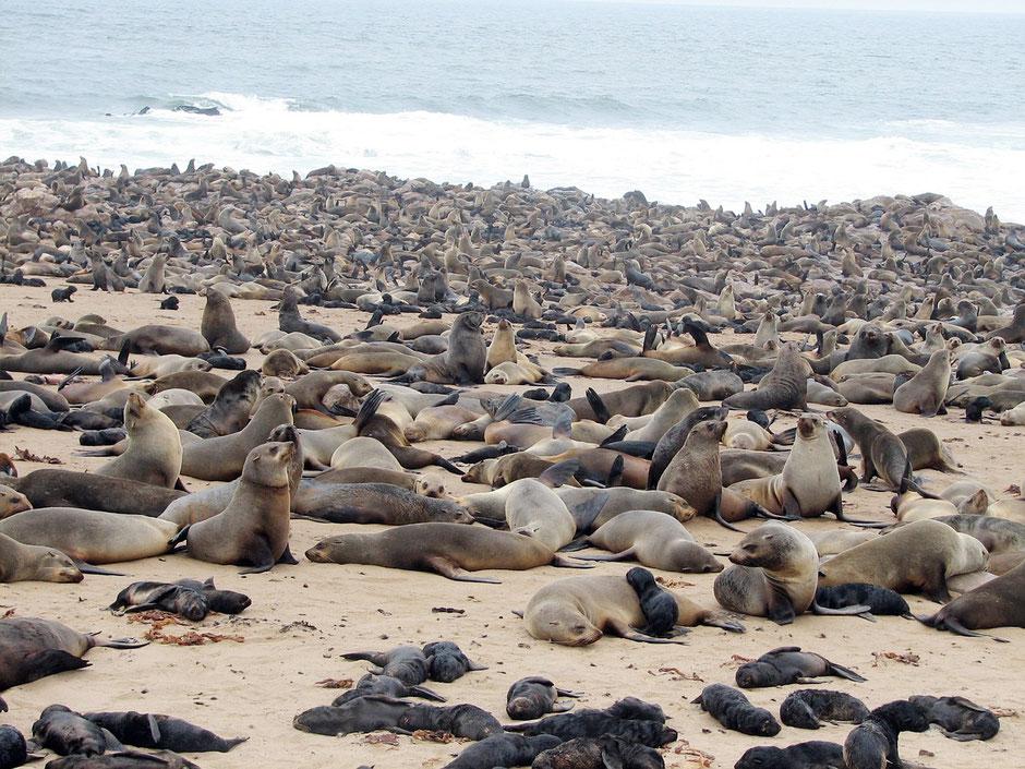 Swakopmund Blog Skelettküste & Cape Cross Robbenreservat
