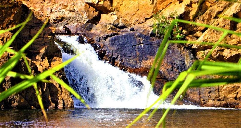 Beste Australien Nationalparks : Litchfield