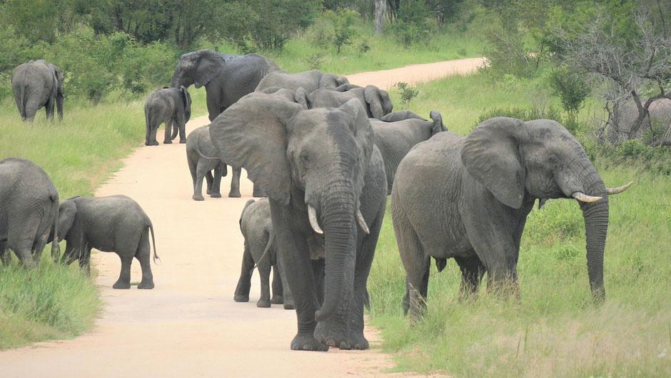 krüger nationalpark safari tour Anreise Lage Route