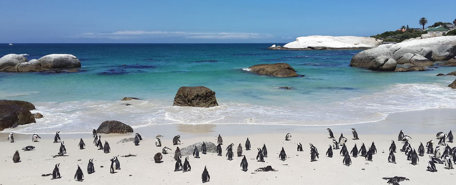 beste reisezeit südafrika krüger nationalpark