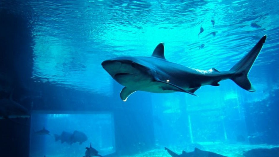 Durban Sehenswürdigkeiten: uShaka Marine World